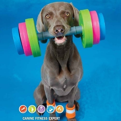 Kyra Canine Conditioning dog fitness training guide gift iwantthisandthat2
